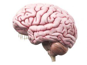 brain-463835